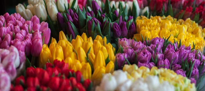 Spring is a wonderful time to enjoy shopping, dining, and the wonderful sights in Bristol, Bucks County PA